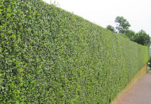 hedge-cutting-maintenance-bethnal-green